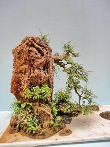 镇江花卉盆景讲座 倡导绿色生态