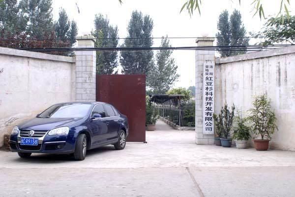 重庆客商注册成立了曼地亚红豆杉科技开发有限公司