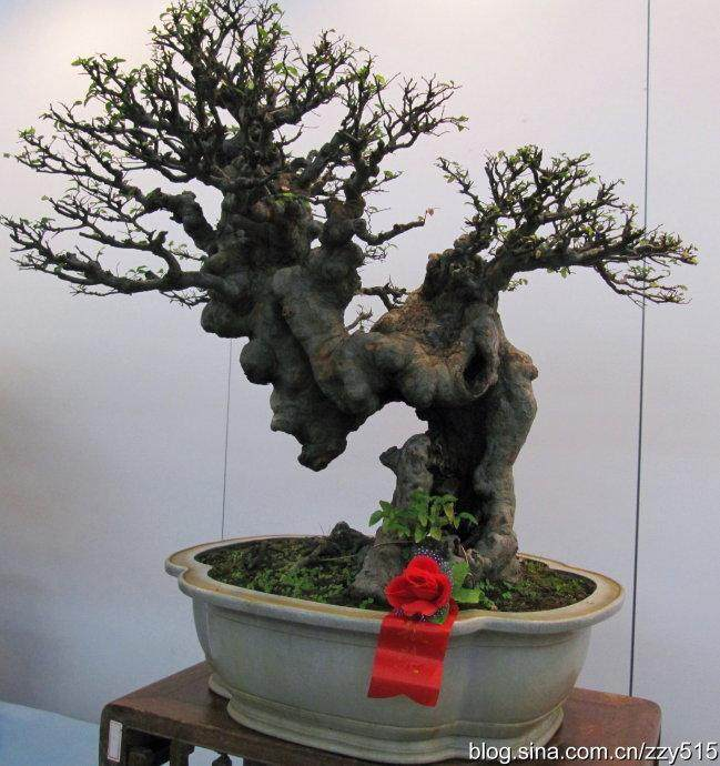 苏州美术馆将举办首届苏派盆景双年展