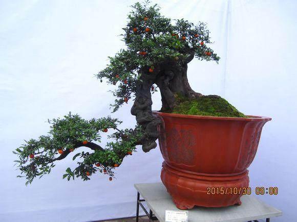 重庆永川盆景花卉批发市场在哪里?