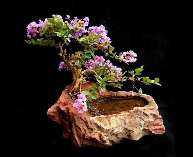 石栽盆景的历史与艺术价值