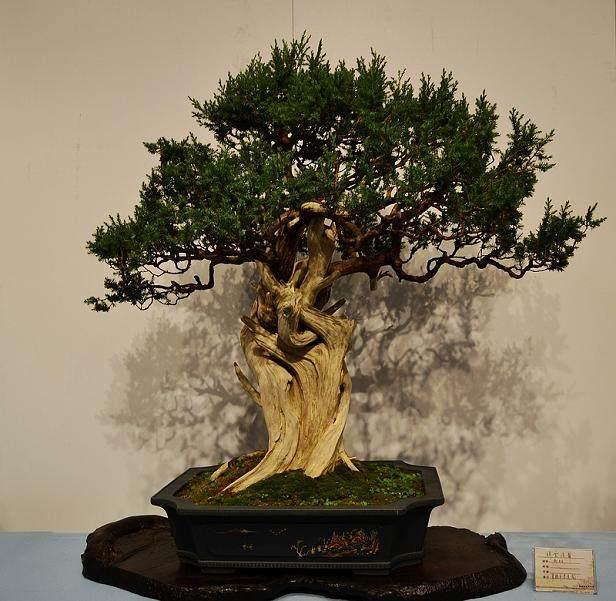 为盆友全面解读苏州园林与苏州盆景的历史渊源