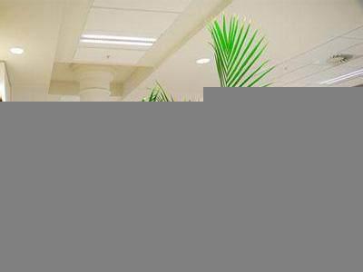 办公室盆栽植物摆放的15个风水禁忌