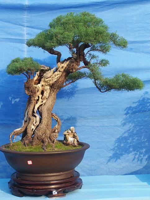 中州盆景学会培训基地挂牌仪式在市盆景园举行