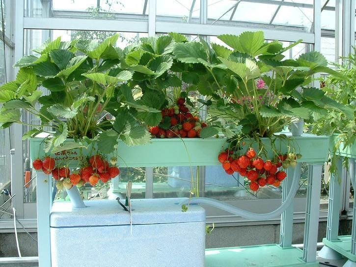 蔬菜盆景将亮相广州花市