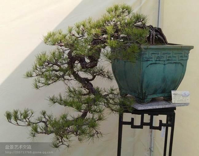 广州花都第六届国际盆景博览会