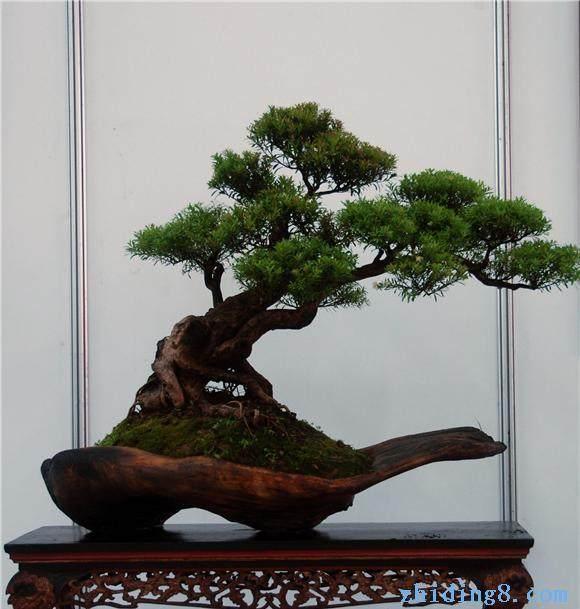 2011年广州盆景赏石宏构展