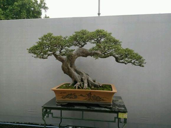 广州举办的第九届粤港澳台盆景艺术博览会