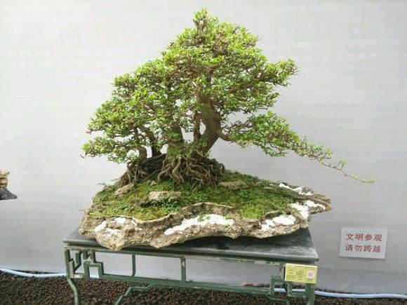 广州市举办国际盆景邀请展