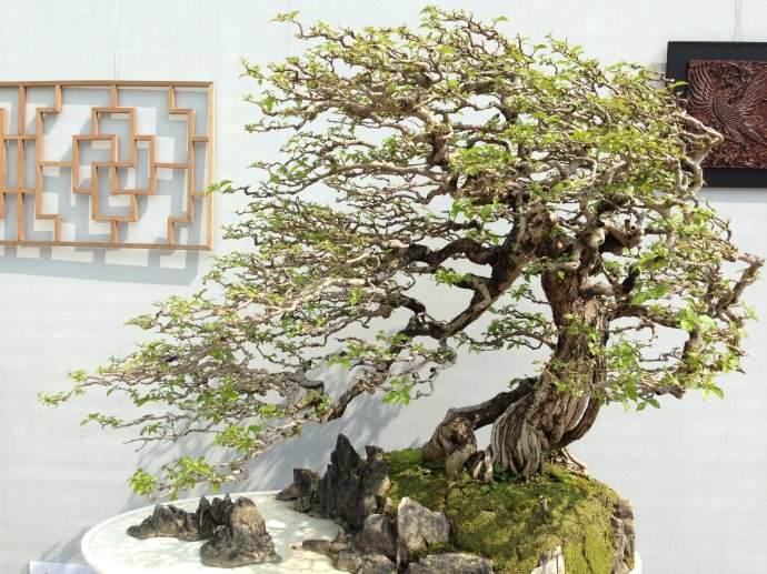 2010广州国际盆景邀请展