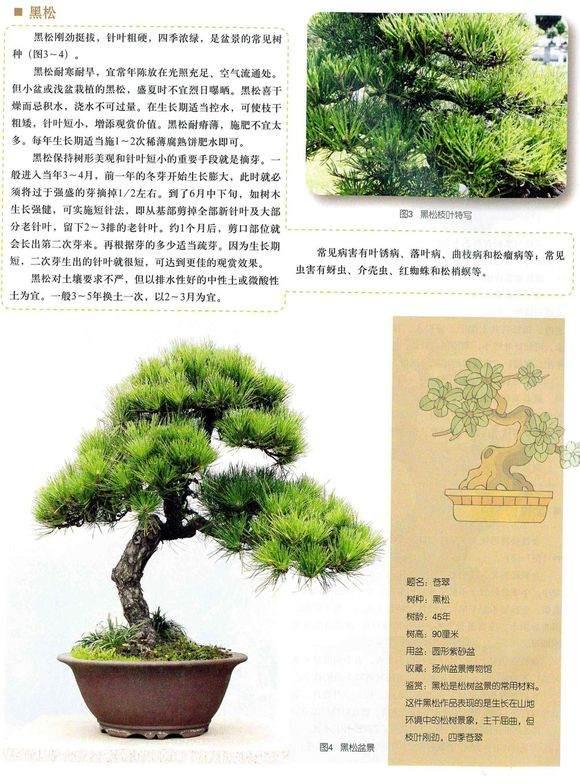 盆景名人---赵庆泉2