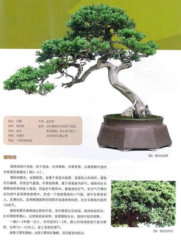 《赵庆泉盆景艺术》出版