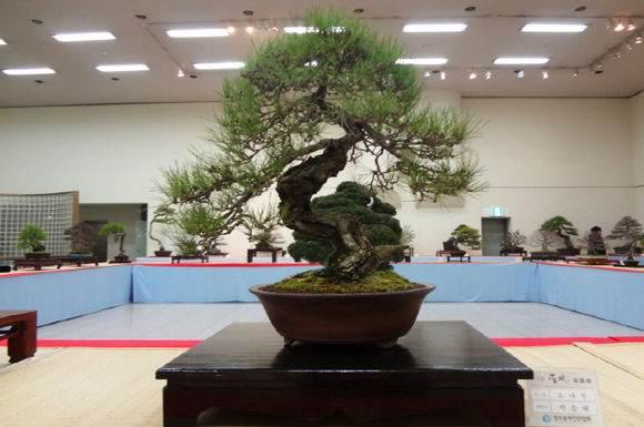 中国盆景艺术大师赵庆泉谈第五届世界盆景大会