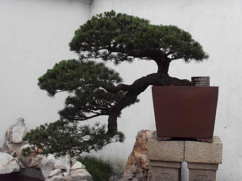 拙政园盆景园是苏州园林三大盆景园之一