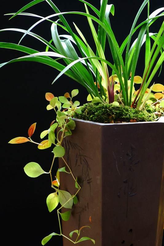 兰花盆景绿色植物机场候机不再焦躁