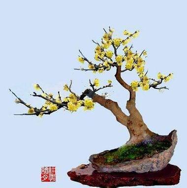 第二十一届苏州街春节宫市和腊梅盆景艺术展