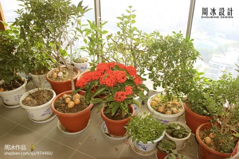 盆景植物免费领 为您阳台添点绿
