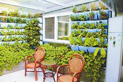 阳台上的小菜园都市农耕的盆景园