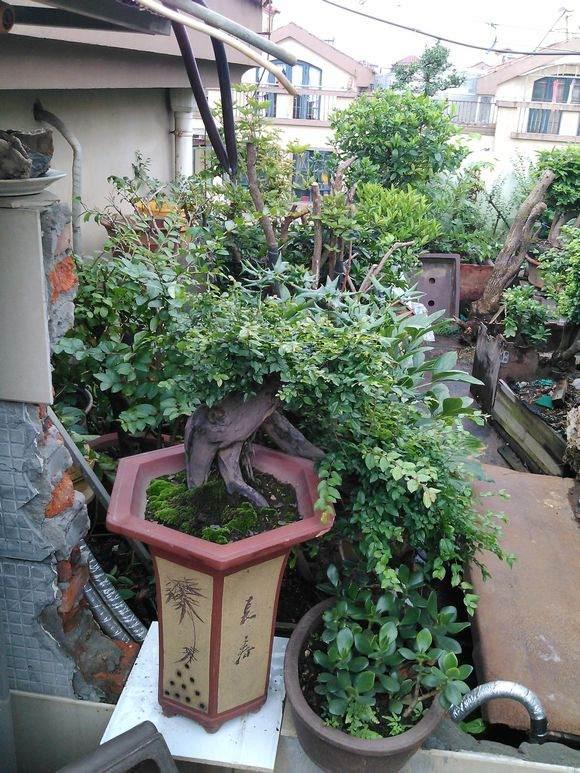 即墨:阳台菜园流行 盆栽蔬菜俏销