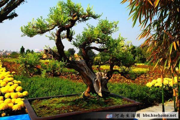 河南省2005年盆景学术研讨会召开
