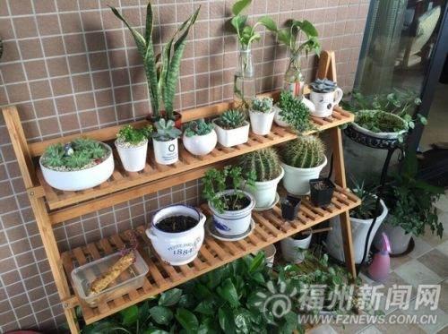 福州巧手姑娘变废为宝 DIY绿色盆栽装扮自家阳台