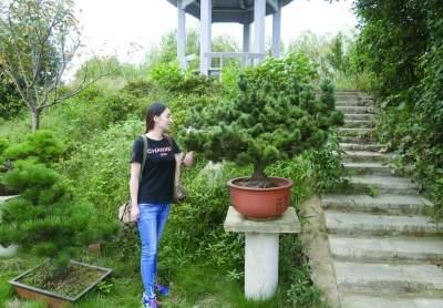 溧阳大学生创办盆景园带动农户致富