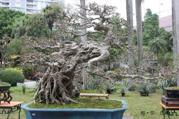江海区科协联合举办岭南盆景科学种植及艺术造型致富交流会