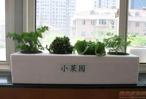 阳台盆栽花卉怎么管理的5个方法
