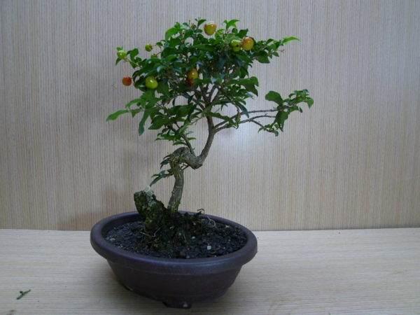 济南:阳台盆栽 既饱口福又增绿意还能赢利