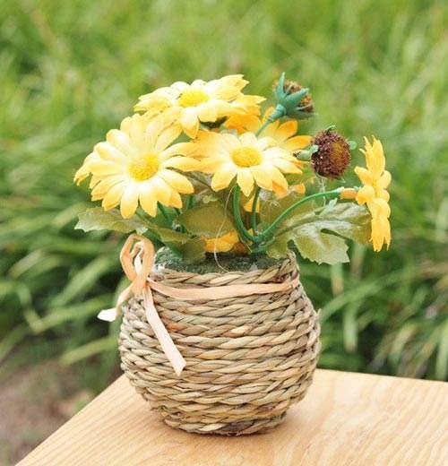 如何让阳台的盆栽菊花矮化