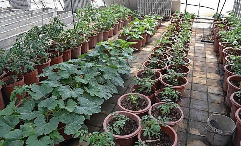 阳台盆栽蔬菜的15种基质营养土