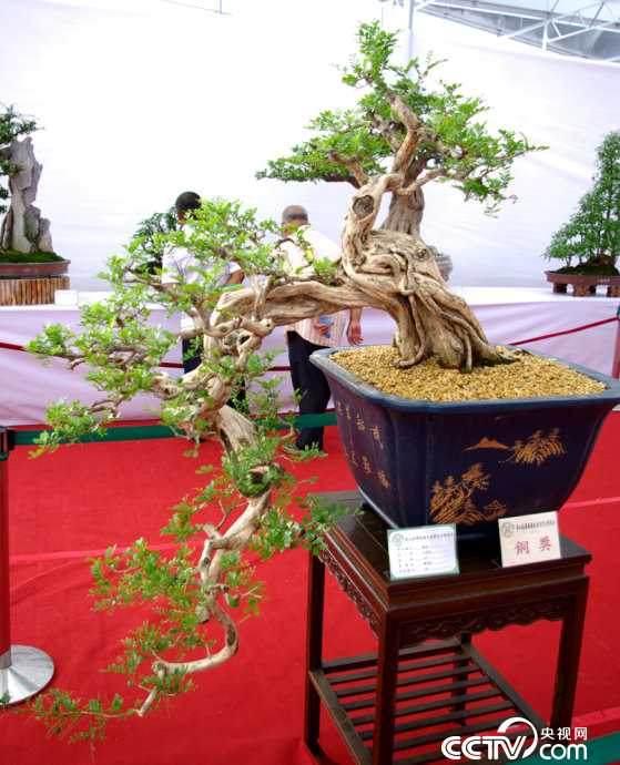 万元以下创业项好目推荐:香味植物盆景店