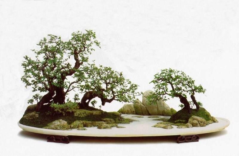 武汉古稀老人制作主题盆景 祝福北京奥运会