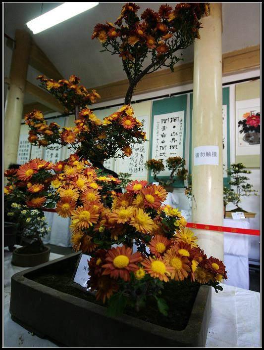 访北京门头沟盆景协会副会长白子峰