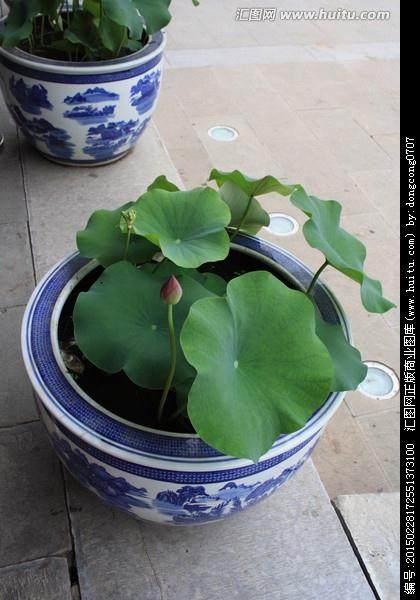 北京御香苑控股集团高层来如考察花木盆景产业