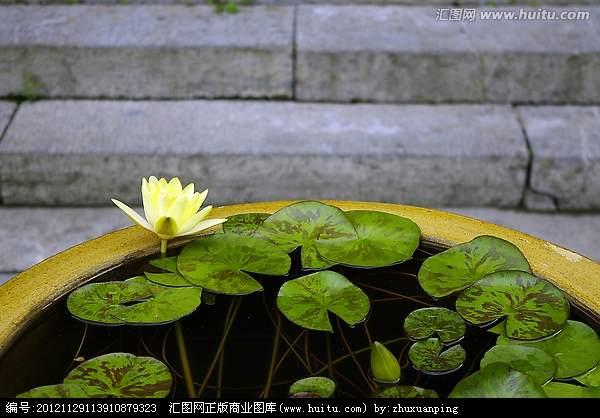 北京北海公园岭南盆景名家精品展举办
