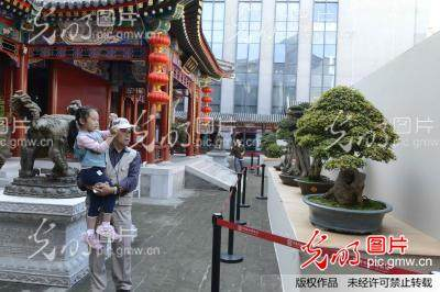 北京:现代中国盆景名家作品首次在园博馆亮相