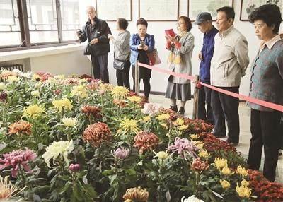 2015菊花展在天津水上公园盆景园举行