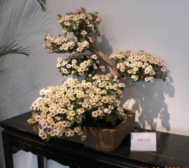 盆景小菊怎么越冬的2个方法