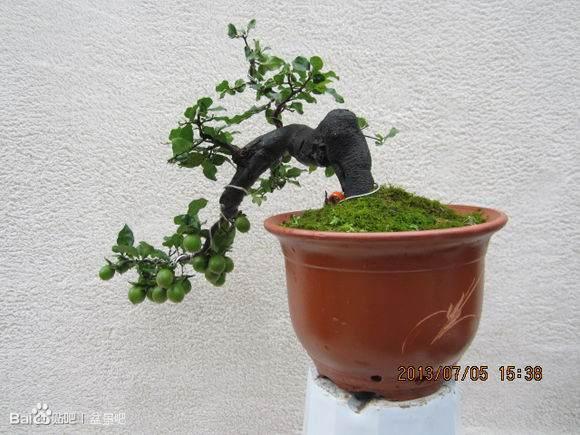 银川花卉盆景春季的行情特别好!