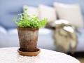 春季 如何给花卉盆景翻盆?