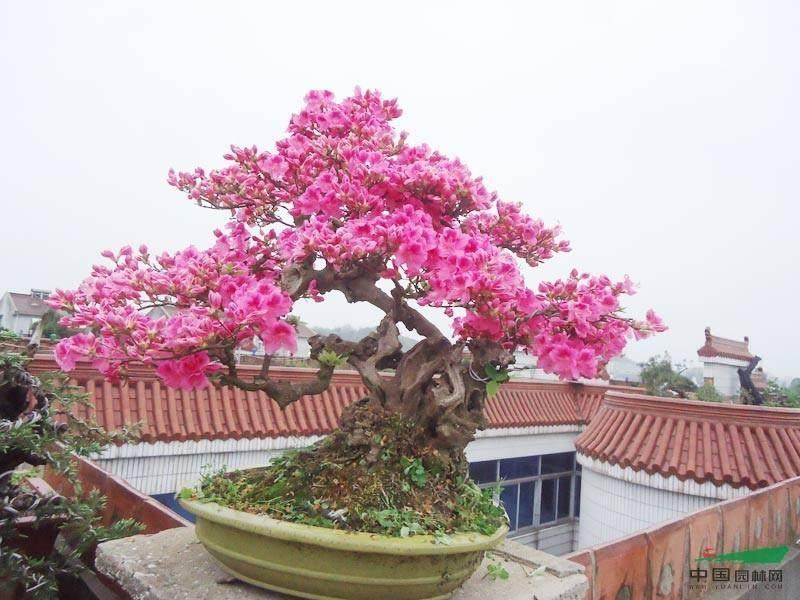 奉贤四团镇老年学校举办春季花卉盆景展