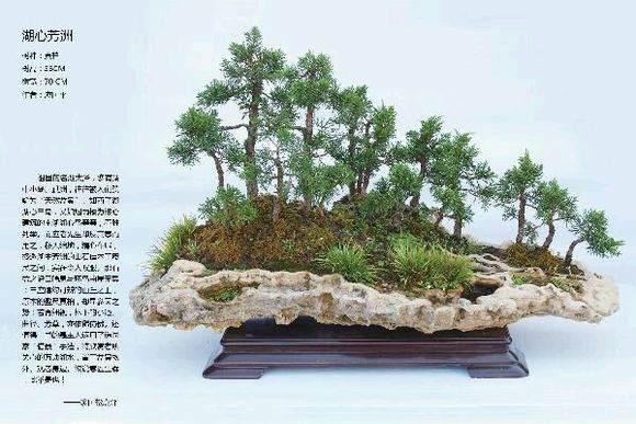 2013国际盆景大会颁奖典礼举行