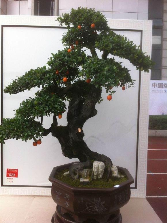 2013国际盆景大会将于明年4·18在扬州举办