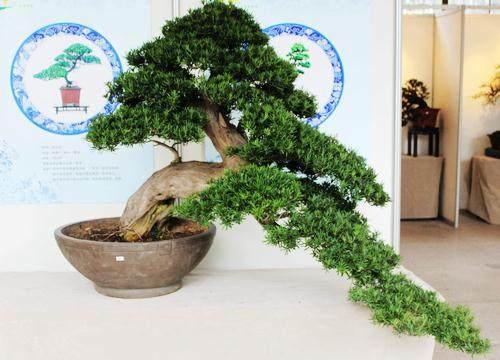 2013国际盆景大会在扬州开幕