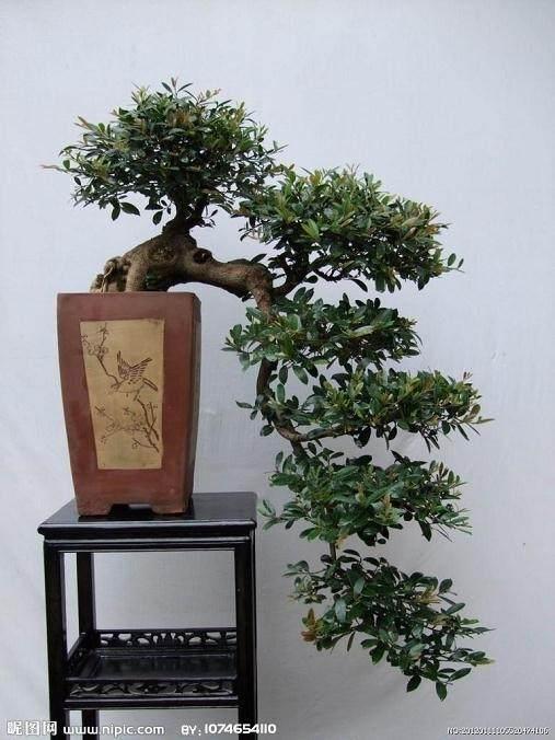 重庆花卉种植户的珍稀盆景花卉可抵押贷款