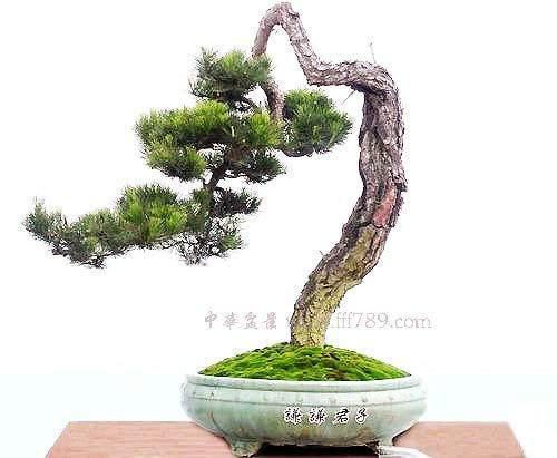 """重庆市第八届盆景艺术展将于""""6.18""""举行"""