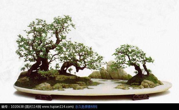 重庆:盆景园开园 精品盆景露脸