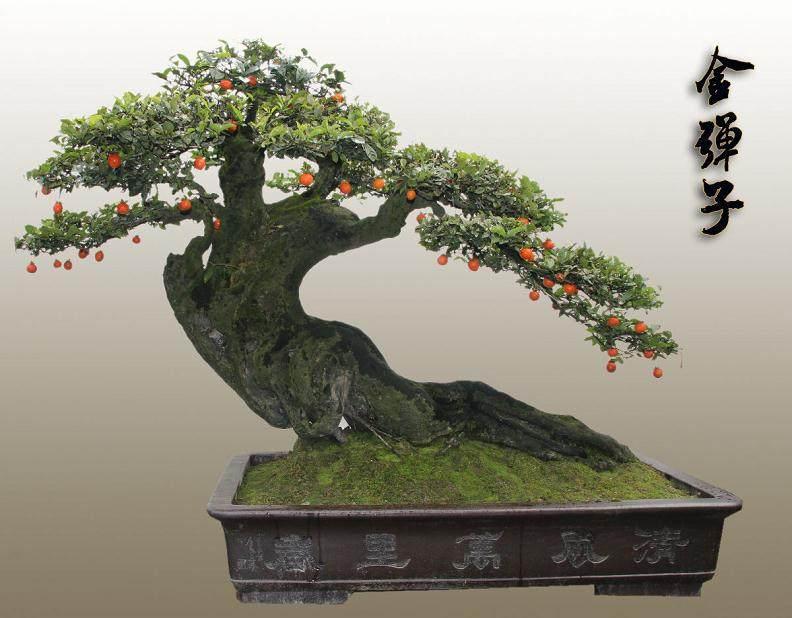 重庆:4万元盆景被盗窃贼竟是卖家