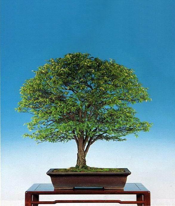 《杂木盆景》内容深入浅出 通俗易懂